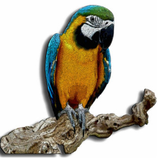 Orange Parrot Photo Sculpture