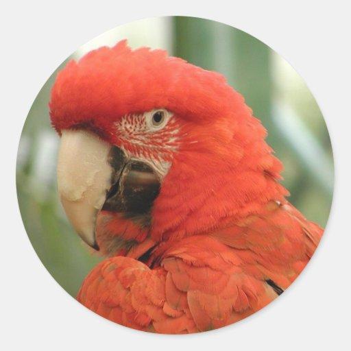 Orange Parrot Sticker