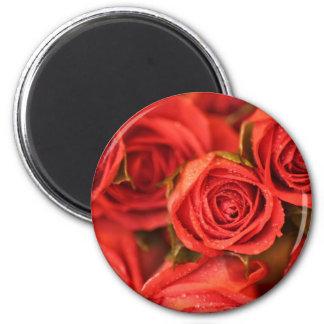 Orange peachy roses photo art magnet