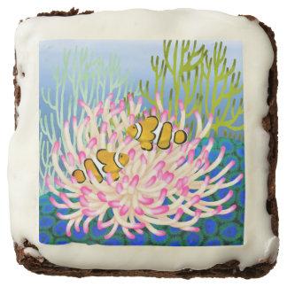 Orange Percula Reef Clownfish Gourmet Brownies Square Brownie