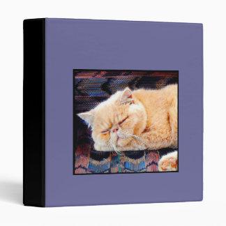 Orange Persian cat binder