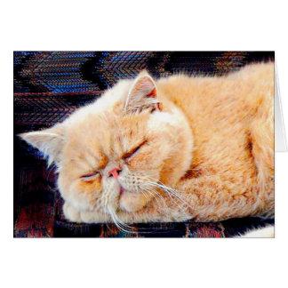 Orange Persian Cat Card