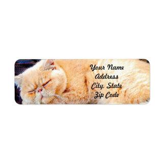 Orange Persian Cat Label