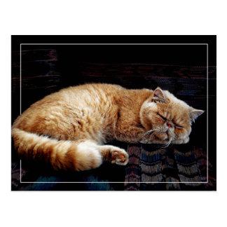 Orange Persian Cat sleeping Postcard