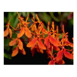 Orange Phalaenopsis flowers Postcard