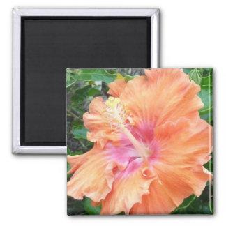 Orange pink Hibiscus magnet