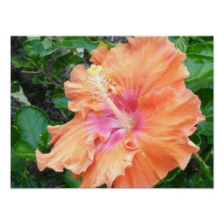 Orange pink Hibiscus print
