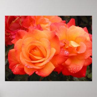 Orange & Pink Roses Poster