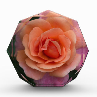 Orange Pinwheel Rose Acrylic Award