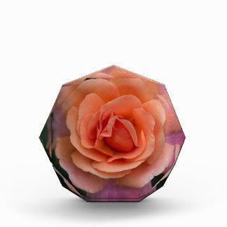 Orange Pinwheel Rose Award