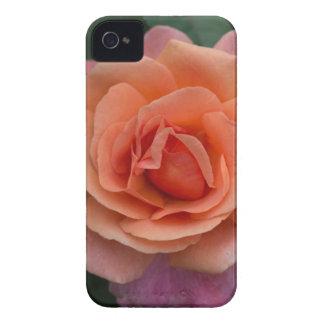 Orange Pinwheel Rose Case-Mate iPhone 4 Case