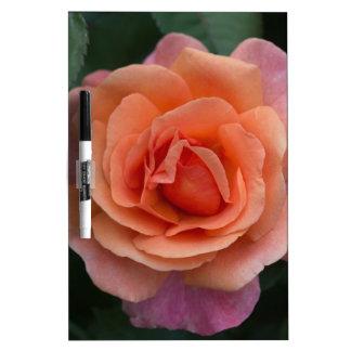Orange Pinwheel Rose Dry-Erase Board