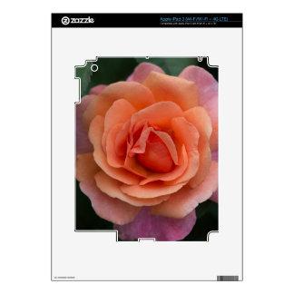 Orange Pinwheel Rose iPad 3 Decals