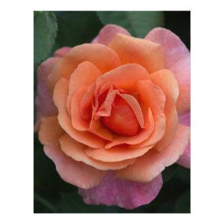 Orange Pinwheel Rose Letterhead