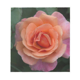 Orange Pinwheel Rose Note Pad