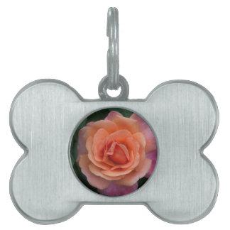 Orange Pinwheel Rose Pet Tag