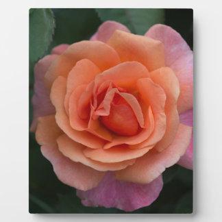 Orange Pinwheel Rose Plaque