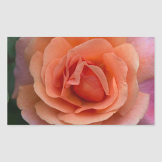 Orange Pinwheel Rose Rectangular Sticker