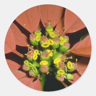 Orange Poinsettia (Euphorbia pulcherrima) flowers Round Stickers