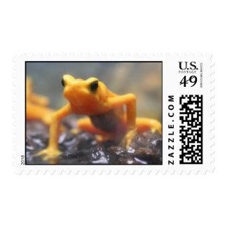 Orange Poison Dart Frog Postage