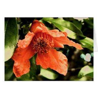 Orange Pomegranate Flower Greeting Card