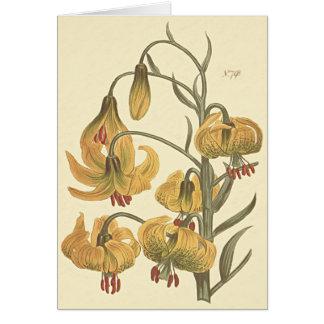 Orange Pompone Lily Botanical Illustration Card