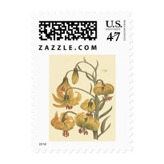 Orange Pompone Lily Botanical Illustration Postage
