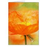 Orange Poppy Cards