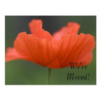 Orange Poppy Change of Address Postcard