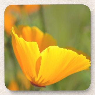 Orange Poppy Floral Coaster