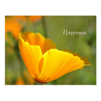 Orange Poppy Floral Postcard