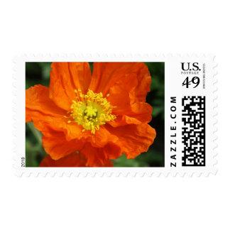 Orange Poppy Flower Postage Stamp