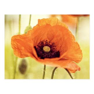 Orange poppy flower postcard