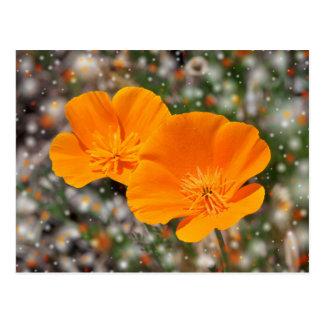 Orange poppy flowers postcard
