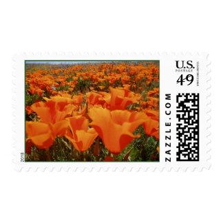 Orange Poppy Heaven Postage