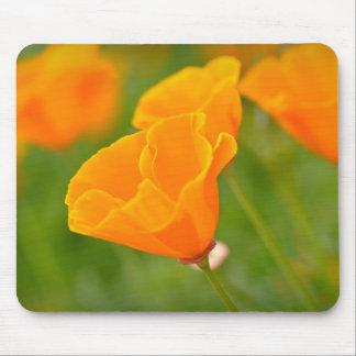 Orange Poppy Macro Flower Mouse Pad