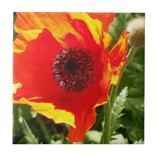 Orange Poppy Tile