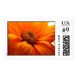 orange postage stamp