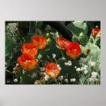 Orange Prickly Pear Cactus Flower Poster