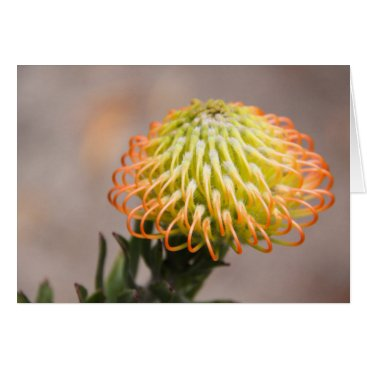 Hawaiian Themed Orange Protea Notecard