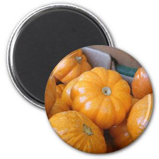 Orange Pumpkin Ghourds 2 Inch Round Magnet