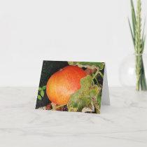 Orange pumpkin on a vine. card