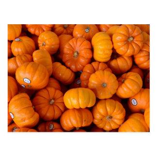 Orange Pumpkins Postcard