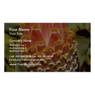 Orange Queen protea Protea magnifica flowers Business Card Template