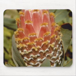 Orange Queen protea (Protea magnifica) flowers Mouse Pad