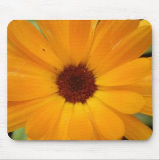 Orange Rain Daisy Mousepad