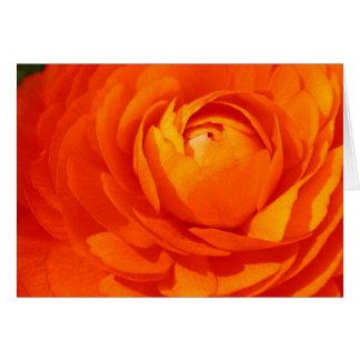 Orange ranunculus card