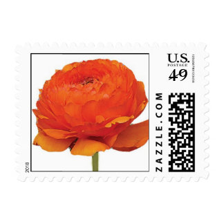 Orange Ranunculus Flower Postage Stamp