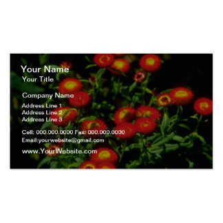 Orange Red flowers with yellow centers flowers Double-Sided Standard Business Cards (Pack Of 100)