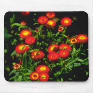 Orange Red flowers with yellow centers flowers Mouse Pad